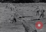 Image of Negro soldiers Bougainville Island Papua New Guinea, 1944, second 3 stock footage video 65675074318