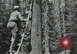 Image of Civilian Conservation Corps United States USA, 1935, second 2 stock footage video 65675074631
