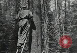 Image of Civilian Conservation Corps United States USA, 1935, second 4 stock footage video 65675074631