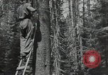 Image of Civilian Conservation Corps United States USA, 1935, second 6 stock footage video 65675074631