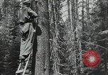 Image of Civilian Conservation Corps United States USA, 1935, second 7 stock footage video 65675074631