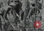 Image of Civilian Conservation Corps United States USA, 1935, second 2 stock footage video 65675074632