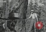 Image of Civilian Conservation Corps United States USA, 1935, second 7 stock footage video 65675074632