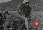 Image of Civilian Conservation Corps United States USA, 1935, second 5 stock footage video 65675074634