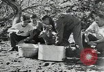 Image of Civilian Conservation Corps United States USA, 1935, second 4 stock footage video 65675074641