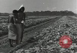 Image of United States soldiers Guadalcanal Solomon Islands, 1944, second 8 stock footage video 65675074684