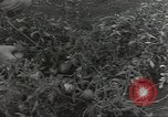 Image of United States soldiers Guadalcanal Solomon Islands, 1944, second 6 stock footage video 65675074689