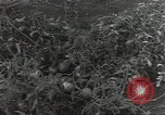 Image of United States soldiers Guadalcanal Solomon Islands, 1944, second 7 stock footage video 65675074689