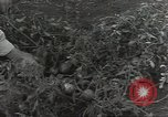 Image of United States soldiers Guadalcanal Solomon Islands, 1944, second 8 stock footage video 65675074689