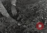 Image of United States soldiers Guadalcanal Solomon Islands, 1944, second 12 stock footage video 65675074689