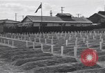 Image of American cemetery Korea, 1950, second 5 stock footage video 65675074964