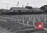 Image of American cemetery Korea, 1950, second 7 stock footage video 65675074964