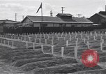 Image of American cemetery Korea, 1950, second 8 stock footage video 65675074964