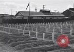 Image of American cemetery Korea, 1950, second 12 stock footage video 65675074964
