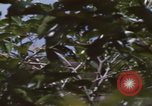 Image of 20th Helicopter Squadron paratroopers Vietnam, 1962, second 11 stock footage video 65675075617