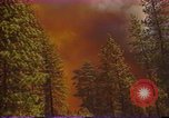 Image of Flames rising above tall trees California United States USA, 1987, second 8 stock footage video 65675075621