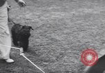 Image of dog show Madison New Jersey USA, 1939, second 12 stock footage video 65675076153