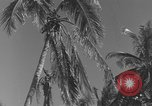 Image of WB-29A Superfortress Bermuda, 1951, second 6 stock footage video 65675076425
