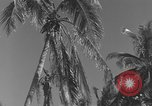 Image of WB-29A Superfortress Bermuda, 1951, second 7 stock footage video 65675076425
