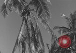 Image of WB-29A Superfortress Bermuda, 1951, second 8 stock footage video 65675076425