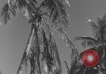 Image of WB-29A Superfortress Bermuda, 1951, second 10 stock footage video 65675076425