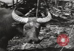 Image of United States Marines Philippines, 1944, second 8 stock footage video 65675076508