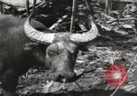 Image of United States Marines Philippines, 1944, second 10 stock footage video 65675076508