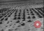 Image of armored division California United States USA, 1943, second 10 stock footage video 65675077080