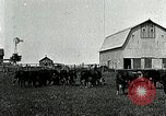 Image of cowboys with cattle herd  United States USA, 1921, second 3 stock footage video 65675077361
