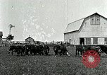 Image of cowboys with cattle herd  United States USA, 1921, second 4 stock footage video 65675077361