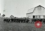 Image of cowboys with cattle herd  United States USA, 1921, second 6 stock footage video 65675077361