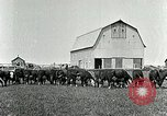 Image of cowboys with cattle herd  United States USA, 1921, second 8 stock footage video 65675077361