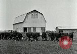 Image of cowboys with cattle herd  United States USA, 1921, second 11 stock footage video 65675077361