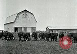 Image of cowboys with cattle herd  United States USA, 1921, second 12 stock footage video 65675077361