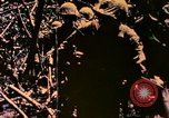 Image of United States Marines Bougainville Island Papua New Guinea, 1944, second 3 stock footage video 65675077479