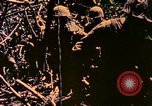 Image of United States Marines Bougainville Island Papua New Guinea, 1944, second 4 stock footage video 65675077479