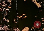 Image of United States Marines Bougainville Island Papua New Guinea, 1944, second 7 stock footage video 65675077479