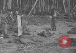 Image of Japanese prisoners Solomon Islands, 1945, second 11 stock footage video 65675077697