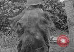 Image of Japanese rifle Solomon Islands, 1945, second 6 stock footage video 65675077700