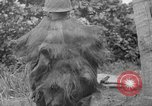 Image of Japanese rifle Solomon Islands, 1945, second 8 stock footage video 65675077700