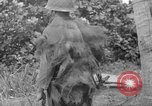 Image of Japanese rifle Solomon Islands, 1945, second 9 stock footage video 65675077700