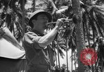 Image of United States Marines Solomon Islands, 1945, second 10 stock footage video 65675077710