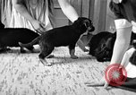 Image of puppies Berchtesgaden Germany, 1940, second 4 stock footage video 65675077772