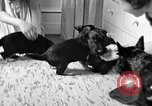 Image of puppies Berchtesgaden Germany, 1940, second 6 stock footage video 65675077772