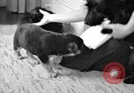 Image of puppies Berchtesgaden Germany, 1940, second 8 stock footage video 65675077772