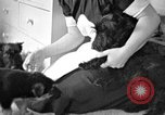 Image of puppies Berchtesgaden Germany, 1940, second 10 stock footage video 65675077772