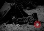 Image of dogs used for war United States USA, 1943, second 2 stock footage video 65675077872