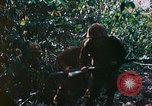 Image of 2nd Marine Division Saipan Northern Mariana Islands, 1944, second 11 stock footage video 65675077875