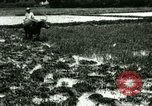Image of rice cultivation Philippines, 1915, second 2 stock footage video 65675078021