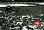 Image of rice cultivation Philippines, 1915, second 3 stock footage video 65675078021